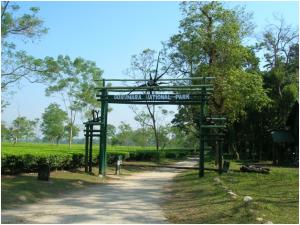 A view of the Gorumara National Park